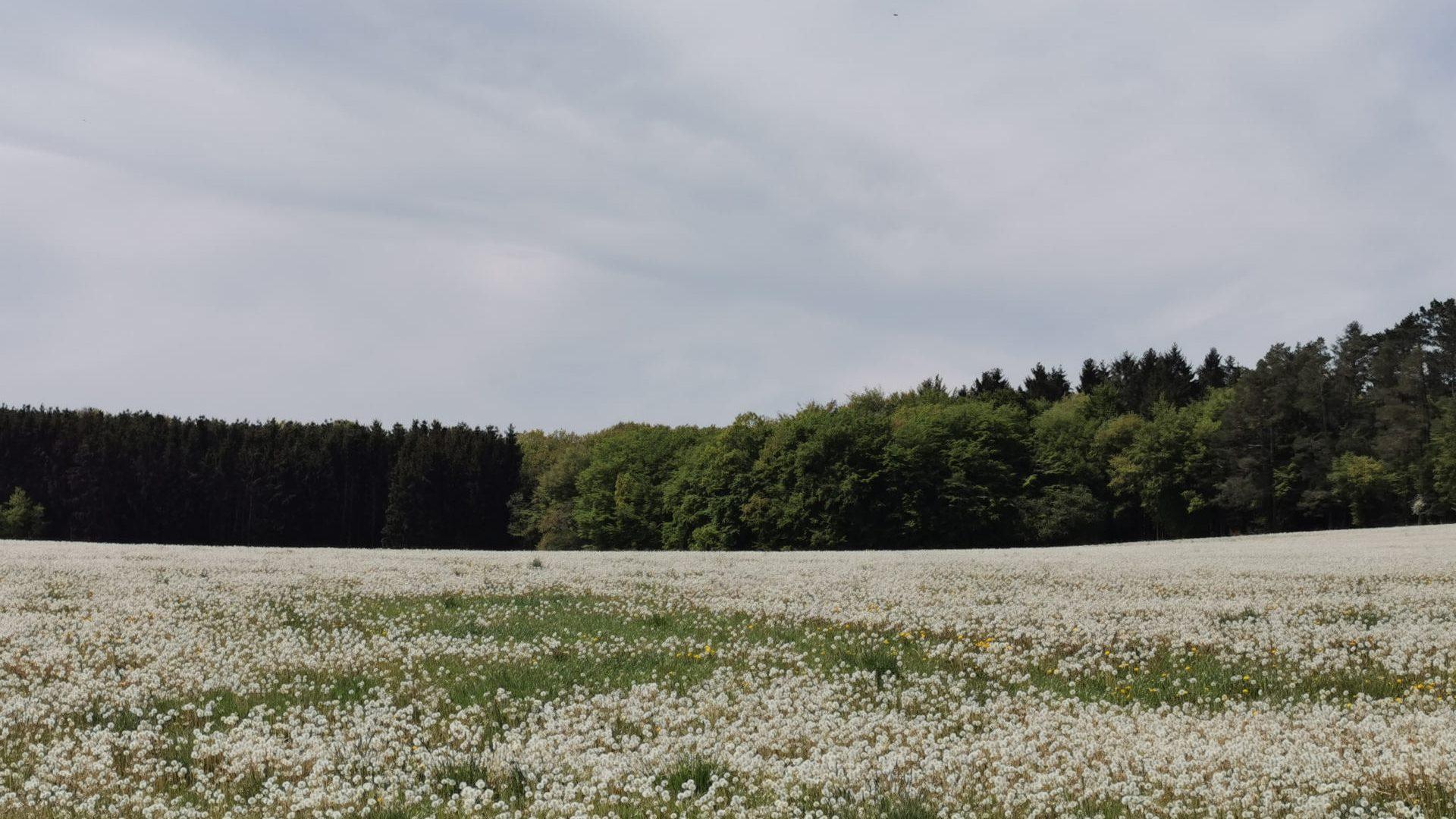 Ferienhaus-Landhaus-Loogh-Umgebung-Üxheim-Leudersdorf